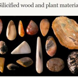Source: https://teara.govt.nz/en/interactive/5124/silicified-wood-and-plant-material