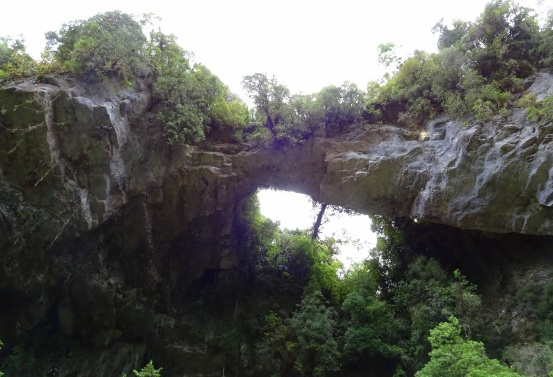 Oparara Arch, towering high up, a limestone feature