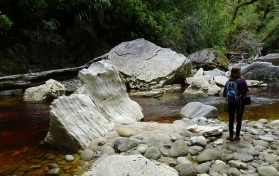 In the Oparara River, just below the Oparara Arch