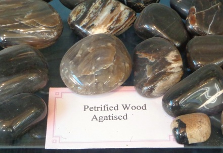 Agatised wood specimens at the Birdlings Flat Gemstone and Fossil Museum