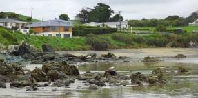 Argillite rocks at Henderson Bay, stones above the high tide mark on the beach