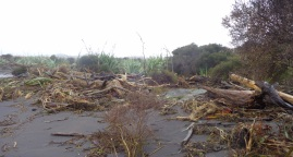 Signs of coastal erosion near Hokitika. June 2016.