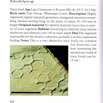 Bottom half of page 64 of A Photographic Guide to Fossils of New Zealand