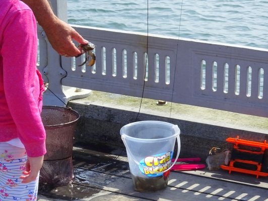 On the Beaumaris pier, people catch crabs