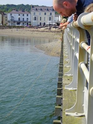 Catching crabs off Beaumaris pier by dangling a baited net