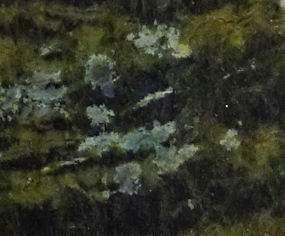 Detail of Gemstone Beach stone.