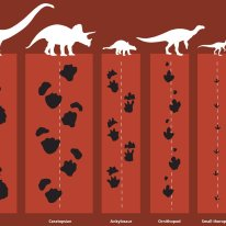 Dinosaurs and their footprints. Source: https://australianmuseum.net.au/learn/dinosaurs/dinosaurs-getting-around