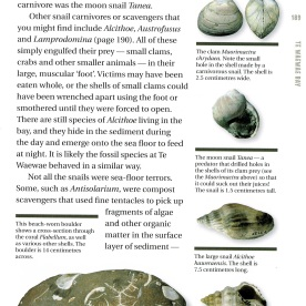 "Page 191 of ""The Kiwi Fossil Hunter's Handbook"""