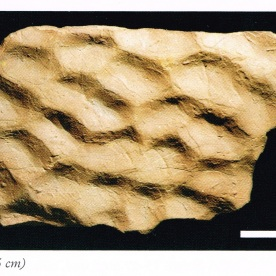 """Patterns generated by sea-floor currents. Source: """"A Photographic Guide to Fossils of NZ"""", page 128."""