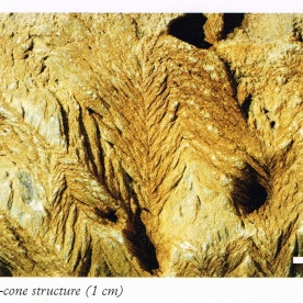 """Patterns generated by inorganic geological forces. Source: """"A Photographic Guide to Fossils of NZ"""", page 129."""
