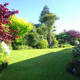 Another view of the lawn and garden