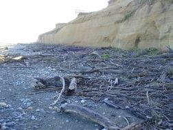 Part of the beach where sand predominates along with driftwood. There, I found...