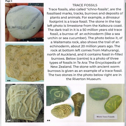 7 Final p5 trace fossils